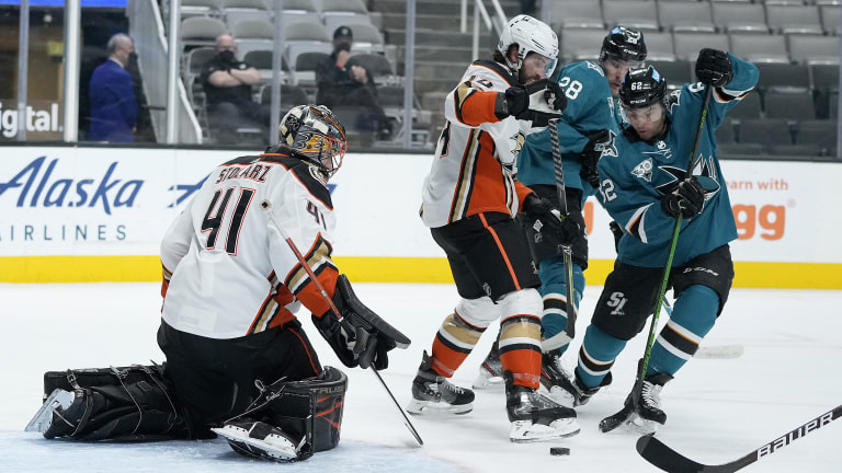 Ducks Sharks Hockey